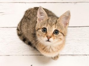 cute cat stares up at you