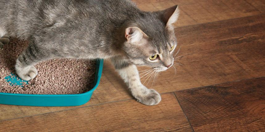 metronidazole for cats side effects