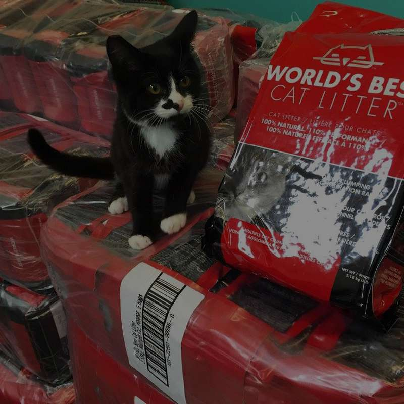Givelitter Free Cat Litter For Hardworking Shelters