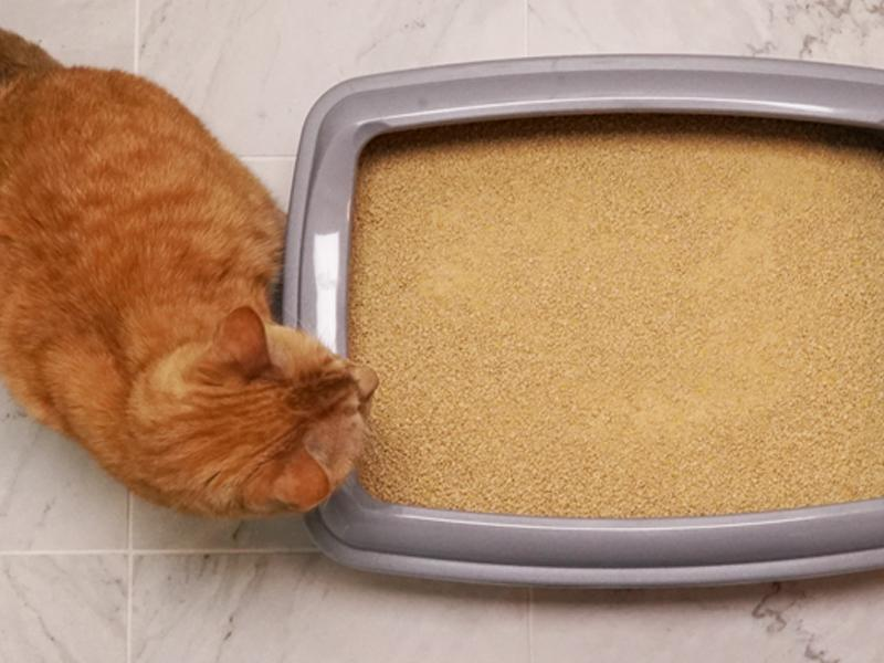 Corn Vs Clay What Types Of Cat Litter To Buy Amp Why