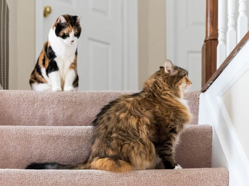 How to Introduce Cats to Each Other: 4. Host a supervised introduction Two cats near each other on stairs