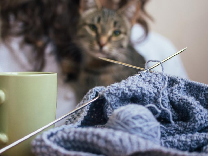 Ways to Help Shelters: Start Knitting or craft group and donate blankets, kitting needles and mug with cat in background