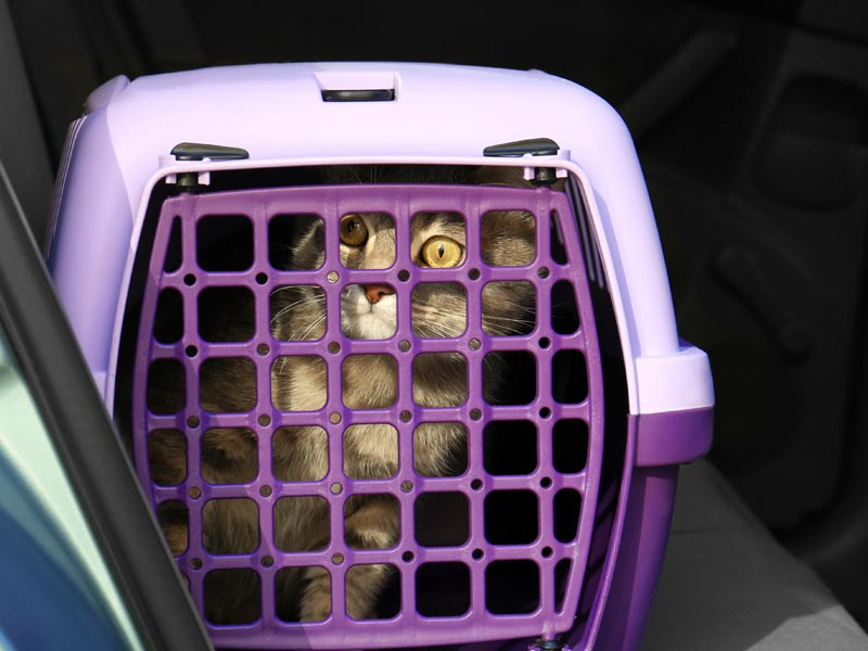 Ways to Help Shelters: Volunteer to transport animals, cat in travel crate in car