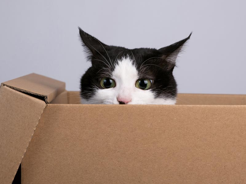 Ways to Help Shelters: Buy item off shelter wishlist, cat poking head out of cardboard box