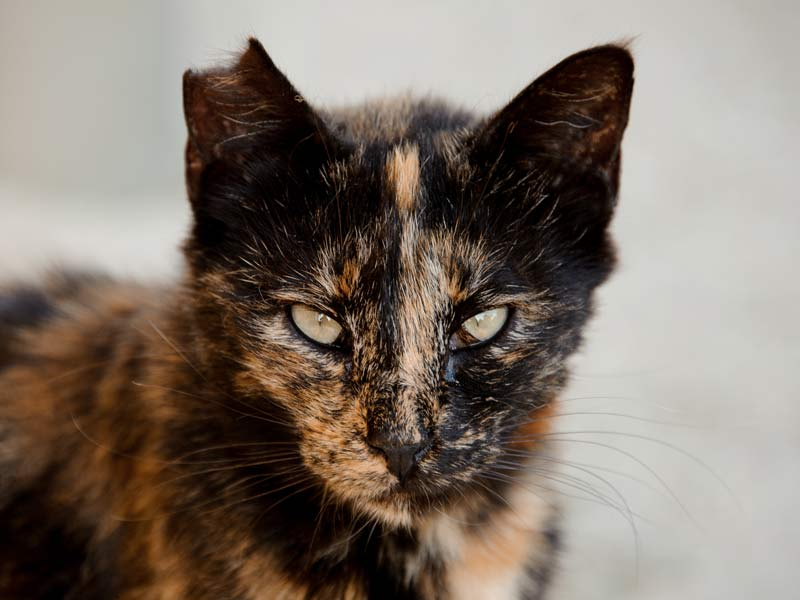 Take their looks into account - cat with distinctive orange and black coloring