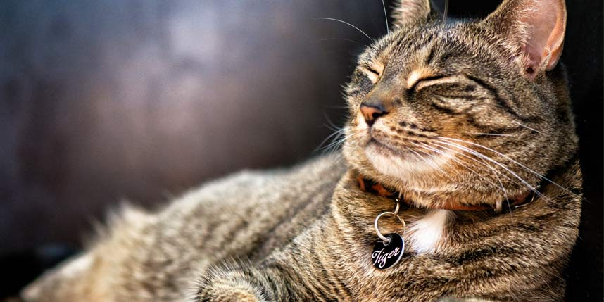 World's Best Compilation of Catchy Cat Names