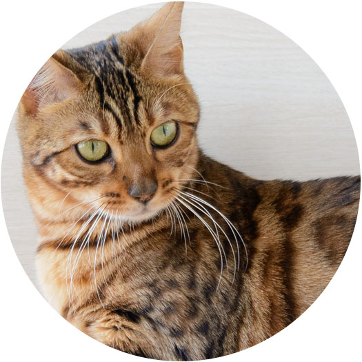 What Kind Of Cat Are You Take This Quiz To Find Out