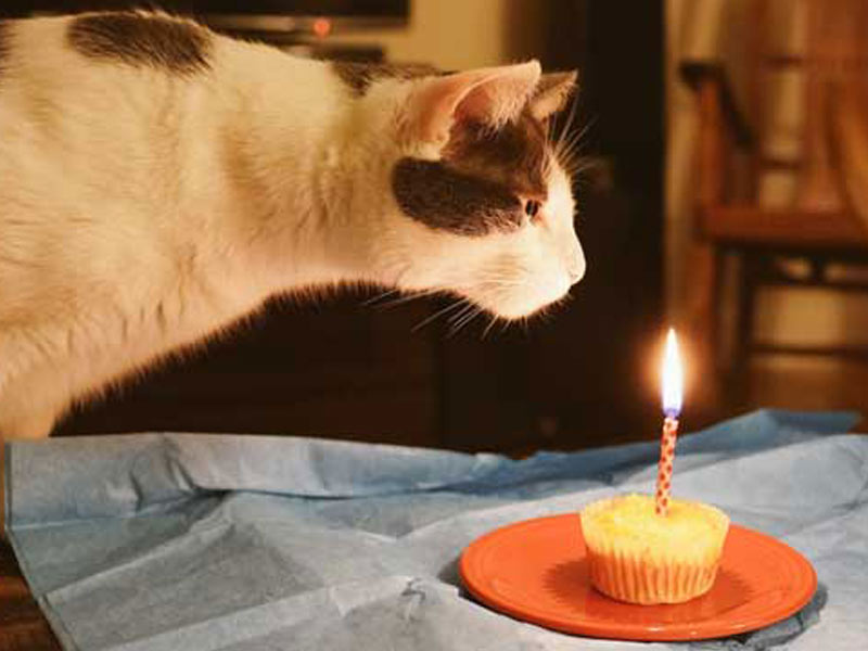 cat leaning towards cat food cake with candle