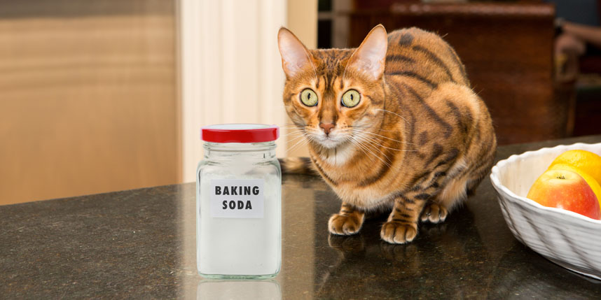 Should you use baking soda in cat litter?