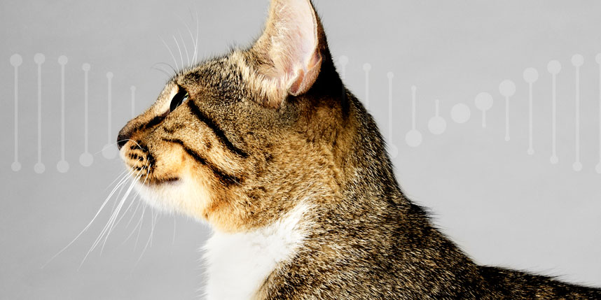 What to Know About Cat DNA Test Kits