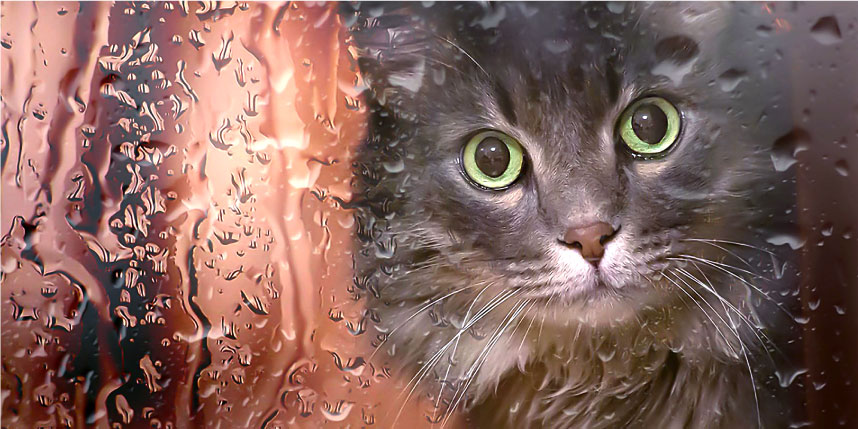 How to Make a Disaster Plan For Your Cat